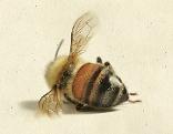 """""""Die Geschichte der Bienen"""""""