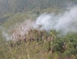 Waldbrand Flugaufnahme