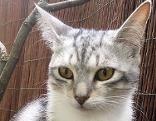Katze Alma