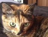 Katze Clara in Oberndorf