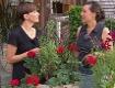 Gut gepflanzt Balkonblumen