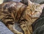 Junge Katze auf Decke