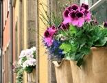 Blumenkisterl