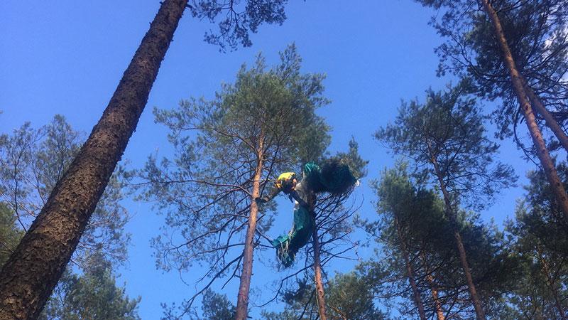 Fallschirmspringerin wird aus Baum gerettet