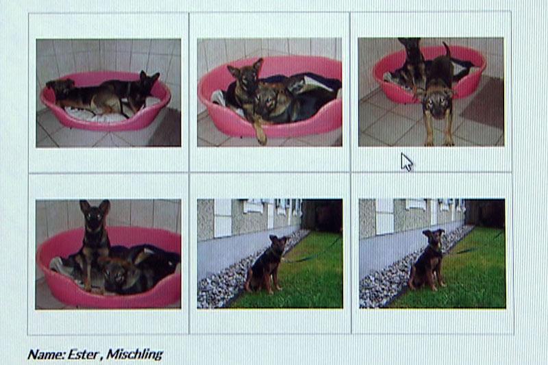 Inserat von Hundevermittlung im Internet