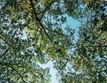 Der Blick von unten durch die Baumkrone in den Himmel. Eine Umschreibung