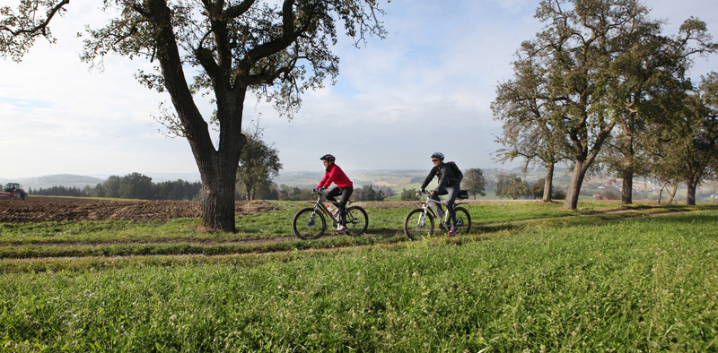 Radeln auf dem Obst-Hügelland-Radrundweg N1