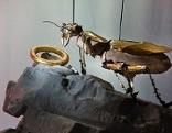 Insekt und Ring