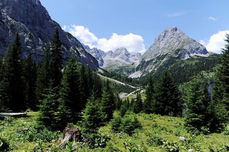 Gaistal Bild 10: Landschaft mit Bäumen und Berge im Hintergrund