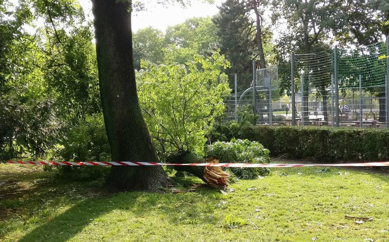 Umgestürzter Baum Unwettereinsatz