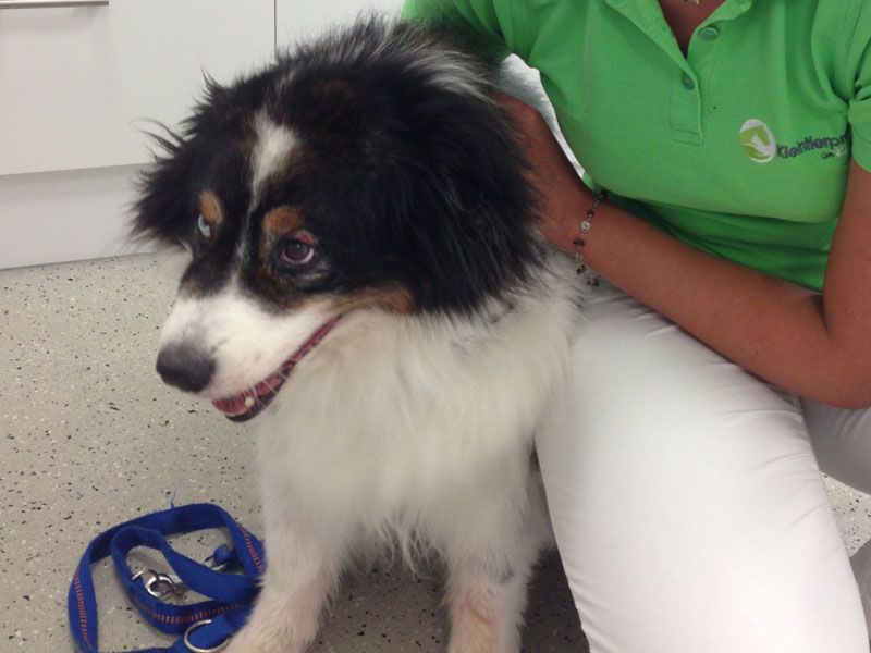 Kleiner Hund in einer Tierarztpraxis