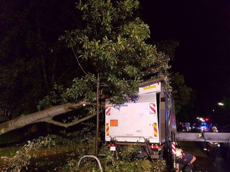 Baum stürzt auf LKW
