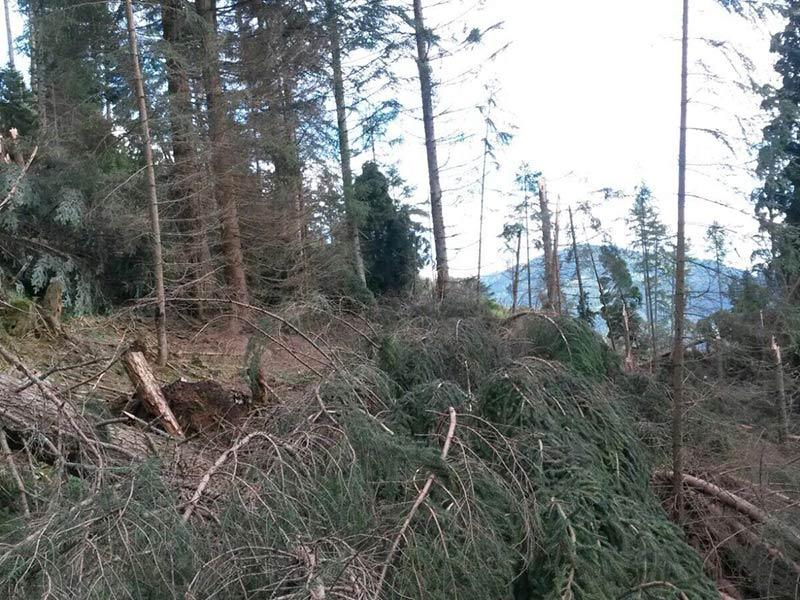 Unwetter Wald Gitschtal Zerstörung