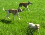 Hunde Hund Hundewiese Wiese Obertrum Tierschutz