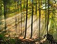 Gozd Slovenija Snežnik-Ždrocle Unesco