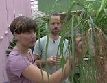 Zimmerpflanzen Ines Gut gepflanzt