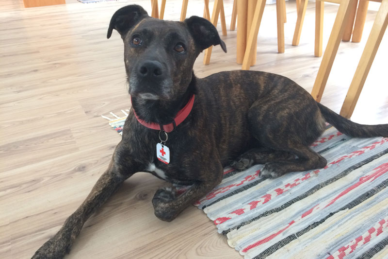 Therapiehunde Rotes Kreuz