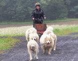 Schlittenhunde-Treffen