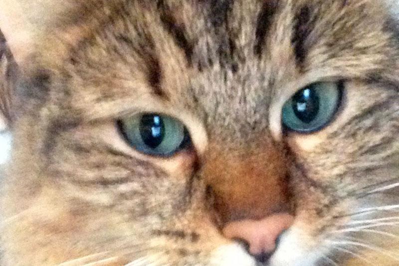 Gesicht einer Katze