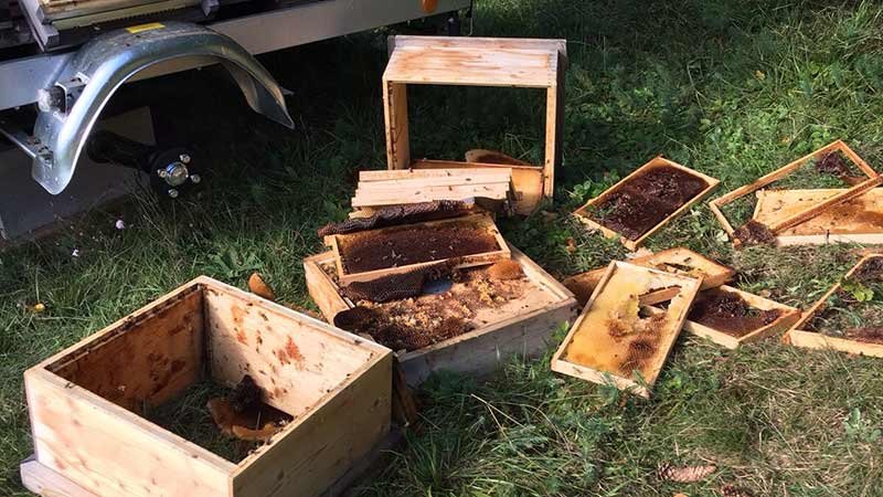 Bär Bienestöcke St Margareten Rosental