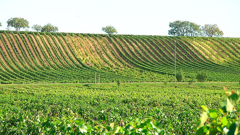 Wagram Weingebirge Parndorfer Platte Neusiedl Halbturn