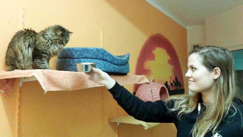 Stefanie Pleyer kümmert sich um eine alte Katze
