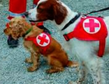 Suchhunde Rotes Kreuz