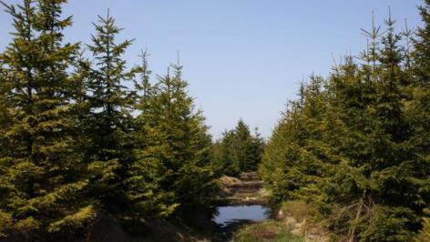 rašeliniště Cínovecký hřbet v Krušných horách