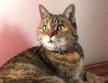 Katze Fiona