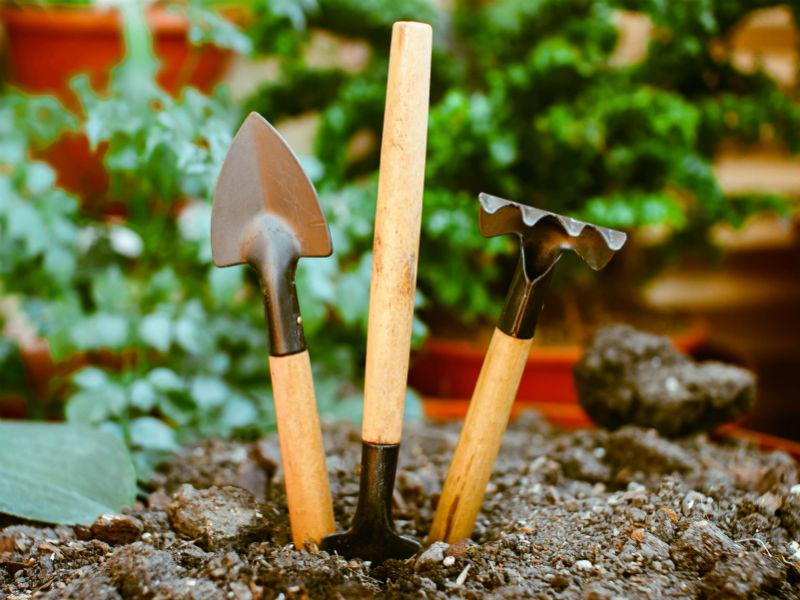 Schaufel, pflanzen