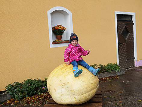 Rekordverdächtiger Kürbis in Mattsee
