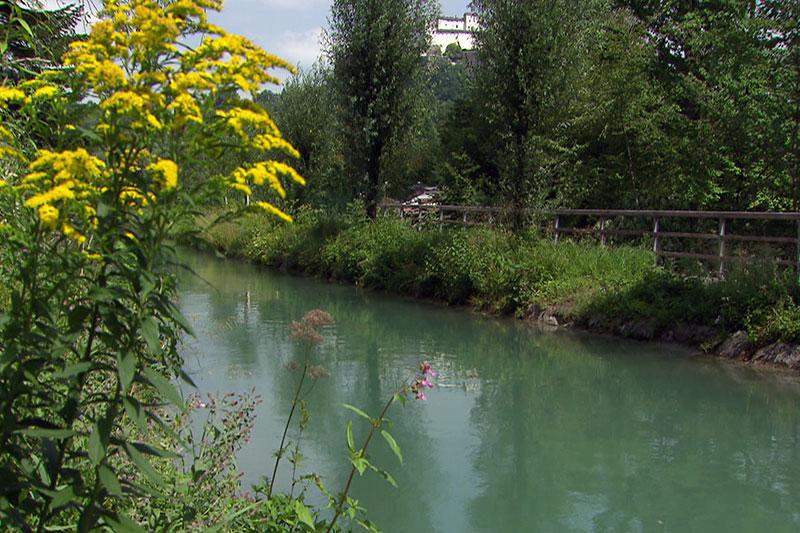 Der Almkanal in der Stadt Salzburg im Hochsommer - im Hintergrund die Festung