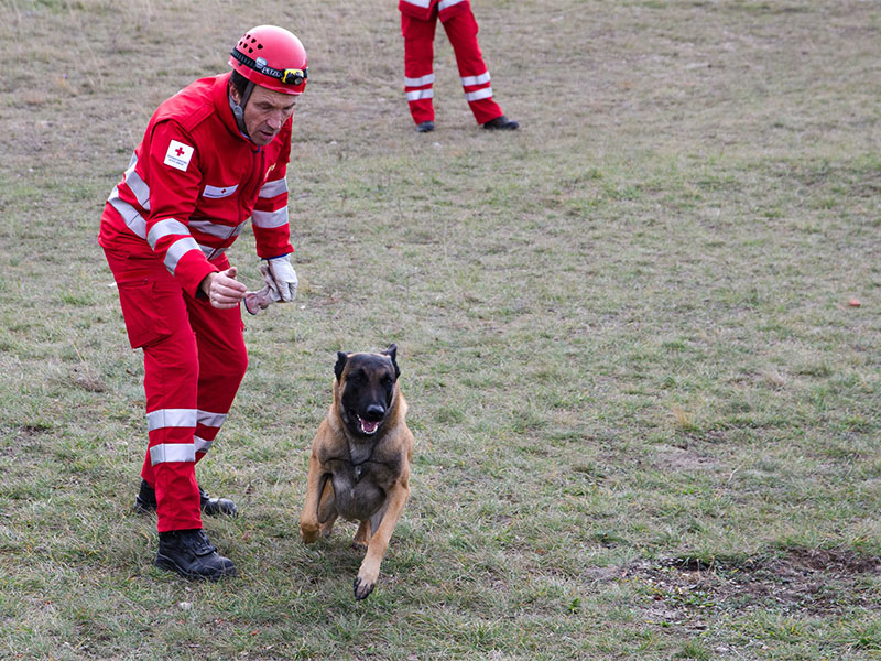 Suchhunde Rotes Kreuz Erdbebenübung