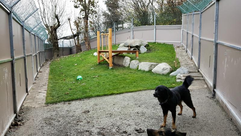 Neues Hundegehege Tierheim Mentlberg