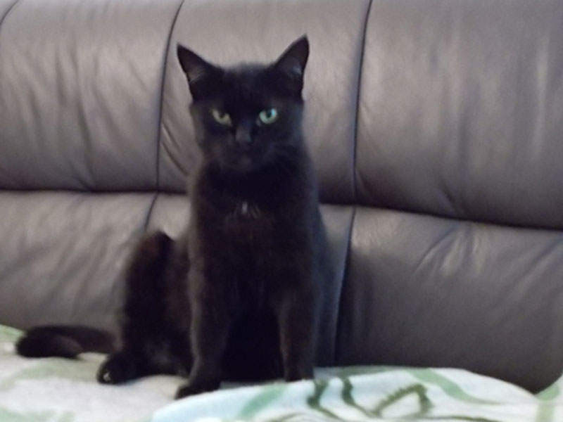 Katze Pezi