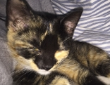 Kätzchen Tria