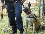 Polizeihunde in Stiwoll im Einsatz