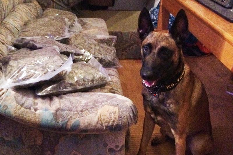 Polizeihund Yankee mit dem Drogenfund