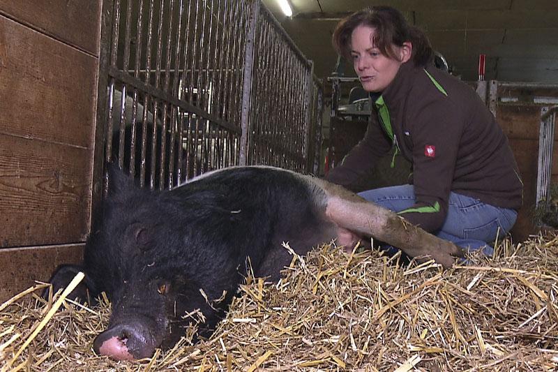 Biobäuerin Johanna Klimmer mit Turopolje Schwein