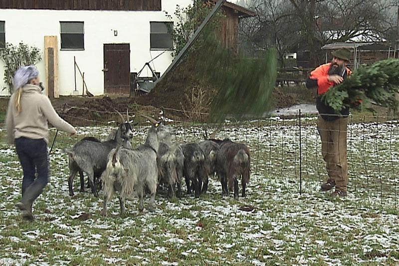 Archebauer Thomas Strubreiter mit Plobe Ziegen