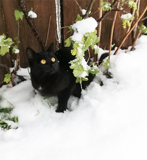 Mini-Katze Blacky in Abtenau weg