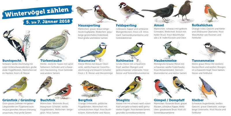 Plakat zur Vogelzählung 2018