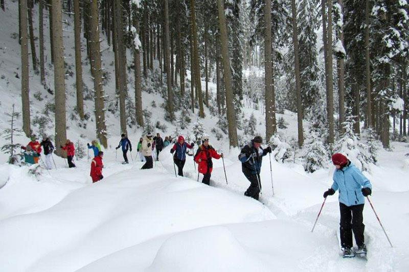 Geführte Schneeschuhwanderung im Wald