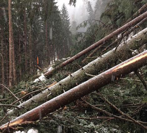 Umgestürzte Bäume auf Gramaiserstraße