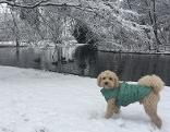 Hund Schnee Wintermantel