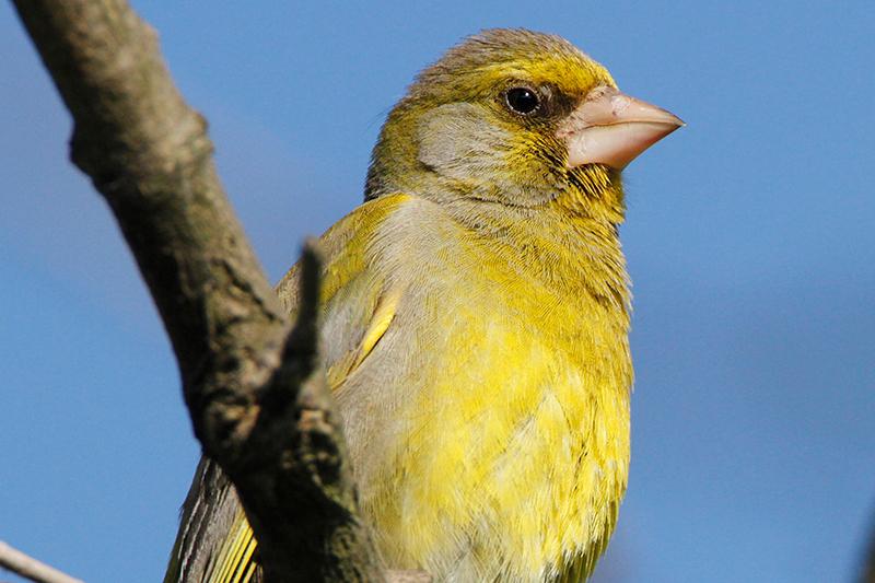 Birdlife Vogelzählung