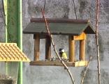Vögel, Vogelhäuschen
