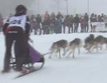 Schlittenhunderennen in Werfenweng