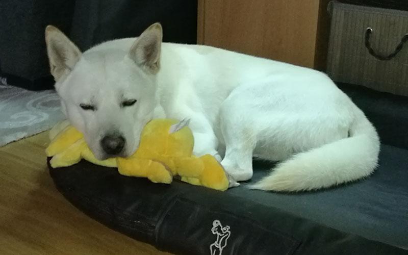 Hund Ares