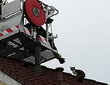 Katze auf Dach Rettung